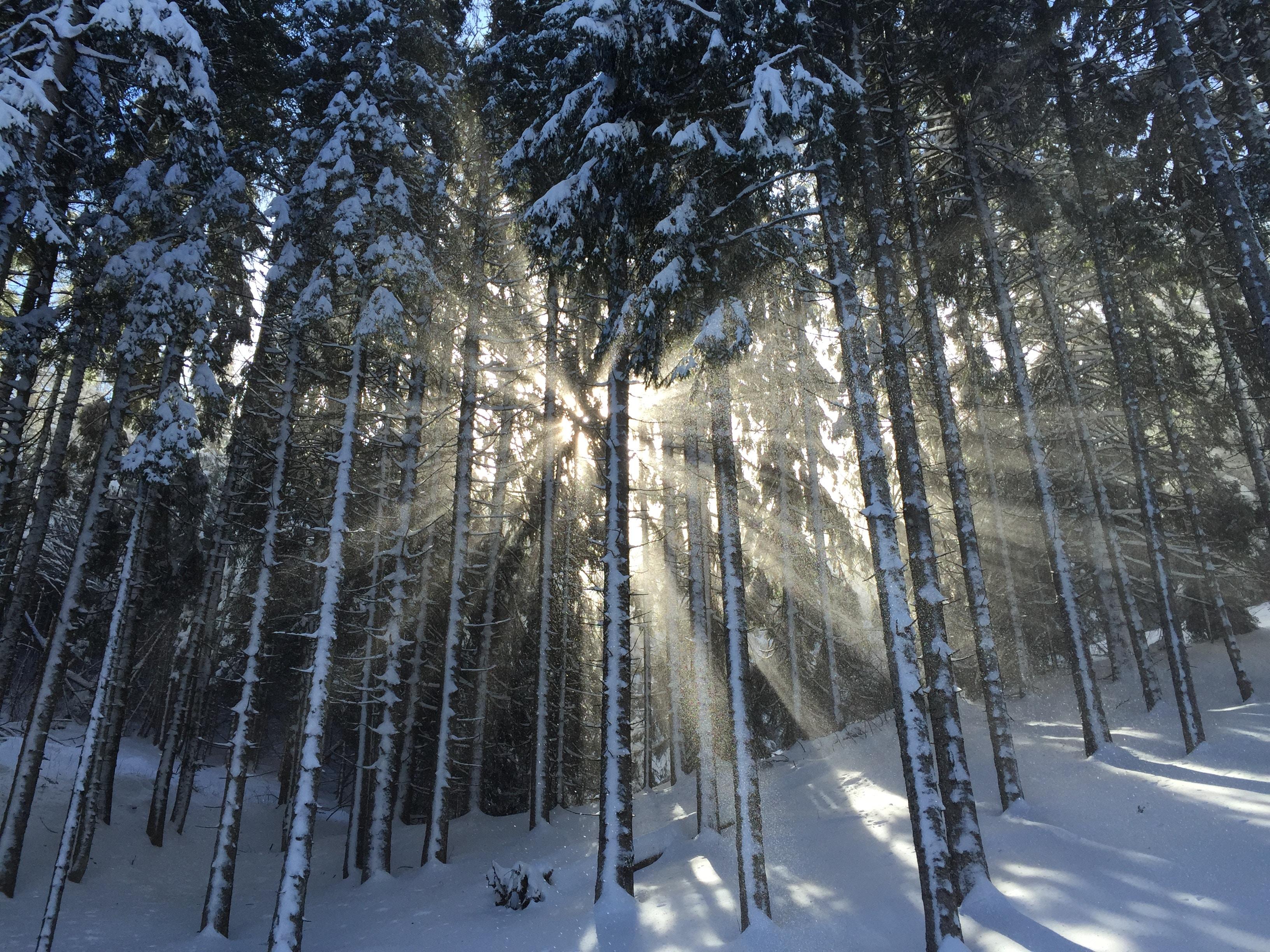 Winterdepression ade! 4 einfache Tipps, die wirken!